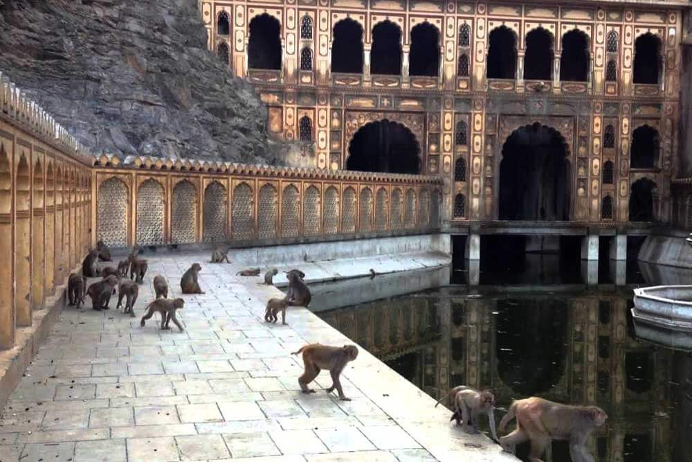 monkey temple in rajasthan